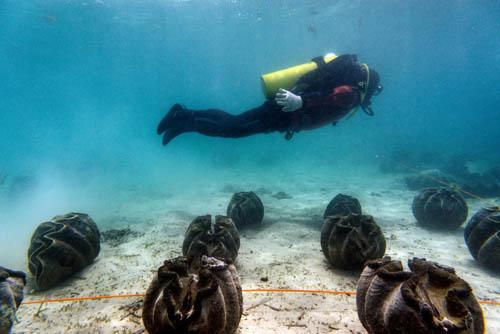 """Lý do dân TQ """"cố sống cố chết"""" săn sò khổng lồ Biển Đông - 3"""