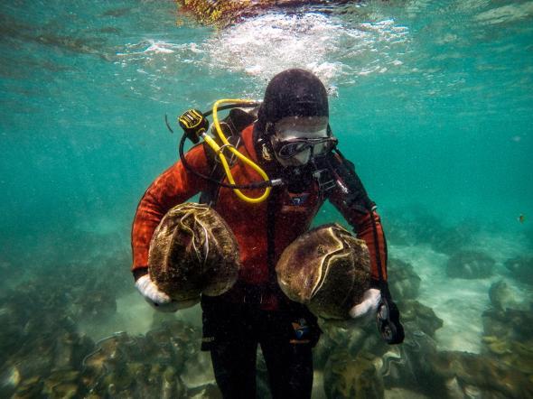 """Lý do dân TQ """"cố sống cố chết"""" săn sò khổng lồ Biển Đông - 4"""