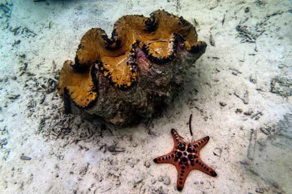 """Lý do dân TQ """"cố sống cố chết"""" săn sò khổng lồ Biển Đông - 6"""
