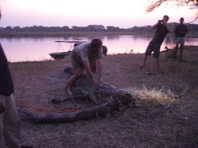 Hoàng tử Anh gây sốt khi lao vào giải cứu cá sấu châu Phi - 2