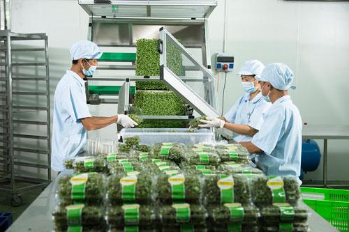 Vingroup liên kết với 1.000 hợp tác xã và hộ nông dân cung ứng nông sản sạch - 2