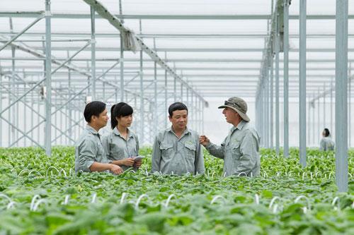 Vingroup liên kết với 1.000 hợp tác xã và hộ nông dân cung ứng nông sản sạch - 3