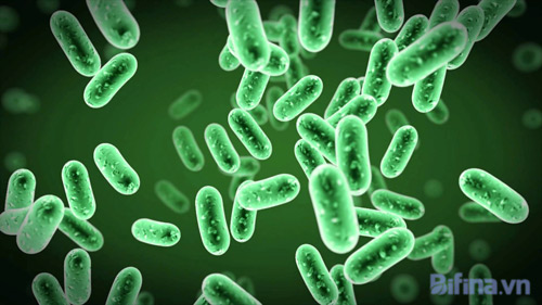 Phát hiện mới của người Nhật Bản trong việc điều trị rối loạn tiêu hóa - 2