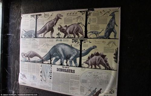 Vẻ bí ẩn bên trong công viên khủng long bị bỏ hoang - 12