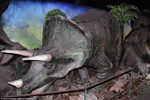 Vẻ bí ẩn bên trong công viên khủng long bị bỏ hoang - 10