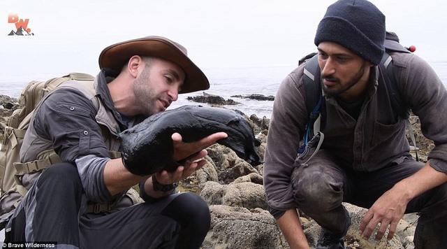 Tìm thấy sinh vật kì dị đen sì như than ở bờ biển Mỹ - 3