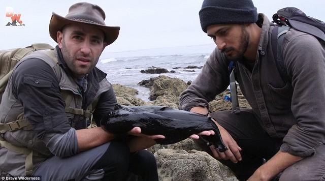 Tìm thấy sinh vật kì dị đen sì như than ở bờ biển Mỹ - 4