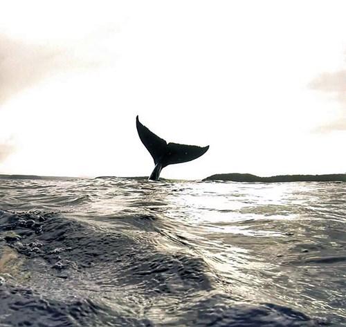 """Chàng trai gây """"sốt"""" với bức ảnh tự sướng với cá voi - 2"""