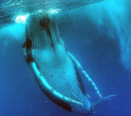 """Chàng trai gây """"sốt"""" với bức ảnh tự sướng với cá voi - 3"""