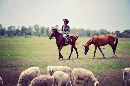 """Đến cánh đồng cừu đang """"hót hòn họt"""" ở Bà Rịa-Vũng Tàu - 5"""