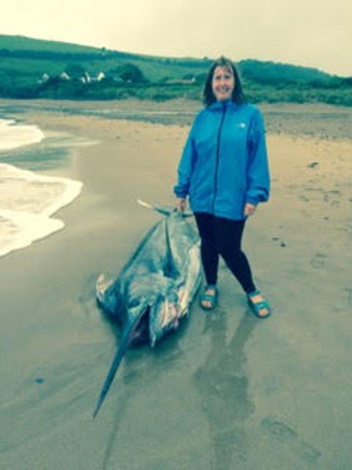 Cá kiếm khổng lồ 91kg dạt bờ biển nước Anh - 2