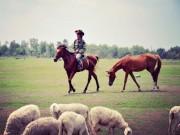 """Đến cánh đồng cừu đang """"hót hòn họt"""" ở Bà Rịa-Vũng Tàu"""