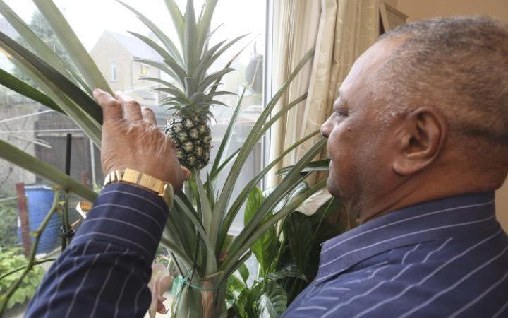 Anh: Mất 8 năm cuộc đời để trồng 1 quả dứa - 2