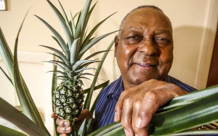 Anh: Mất 8 năm cuộc đời để trồng 1 quả dứa - 1