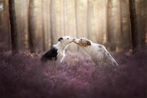 3 chú chó chụp ảnh thơ mộng giữa cánh đồng hoa - 3