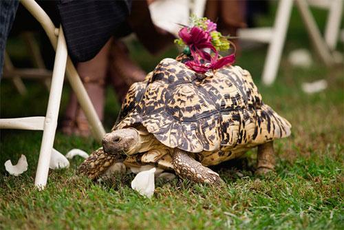 Đám cưới - nơi diễn ra những hình ảnh cực kỳ hài hước - 9