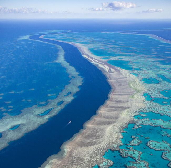 Rạn san hô & nbsp;Great Barrier ở Australia là một trong những kỳ quan dưới nước ngoạn mụcnhất thế giới. Đây là nơi sinh sống của nhiều loài san hô, cá và rùa biển.