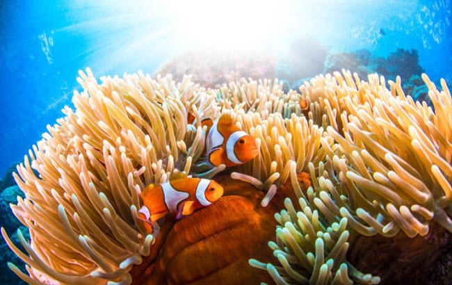 Tuy nhiên, rạn hô Great Barrier đang bị đe dọa bởi tình trạng biến đổi khí hậu và ô nhiễm môi trường.