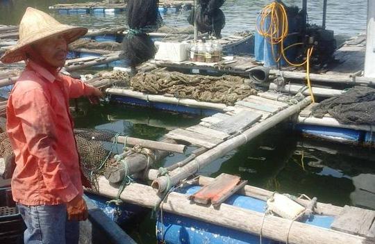 Gần 50 tấn cá lồng chết bất thường ở Thanh Hóa - 3