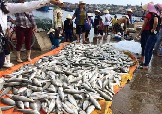 Gần 50 tấn cá lồng chết bất thường ở Thanh Hóa - 1