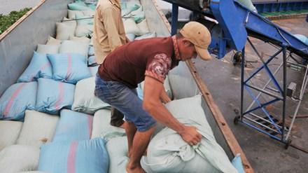 Hãng tàu Hàn Quốc phá sản: Nhiều công ty Việt khốn đốn - 1