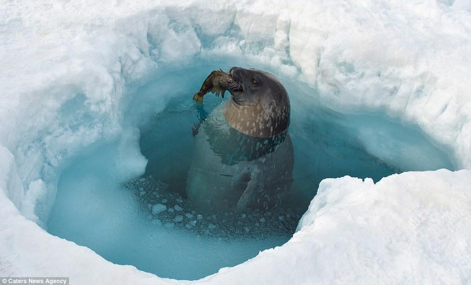 Ảnh: Cuộc sống ở nơi lạnh nhất trái đất - 11