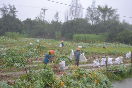 Quảng Nam- Quảng Ngãi: Dừng các cuộc họp để chống bão - 3