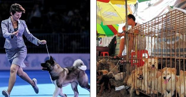 Kêu gọi không tổ chức lễ hội chó quốc tế ở Thượng Hải - 1