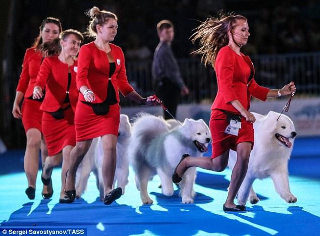 Kêu gọi không tổ chức lễ hội chó quốc tế ở Thượng Hải - 2