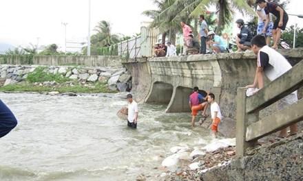 Người Đà Nẵng đổ ra biển bắt… cá nước ngọt - 1