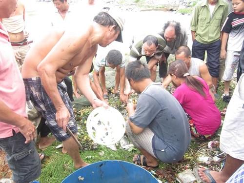 Người Đà Nẵng đổ ra biển bắt… cá nước ngọt - 2
