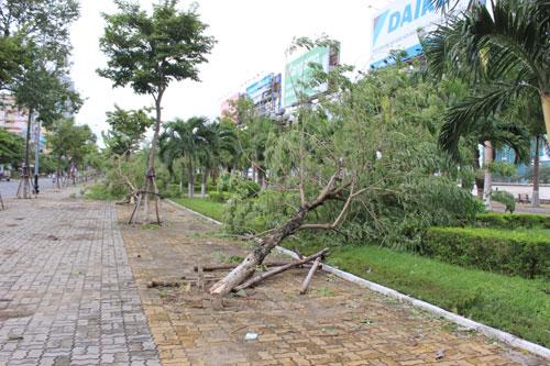 Không hứng bão, hàng loạt cây xanh ở Đà Nẵng vẫn đổ gục - 1