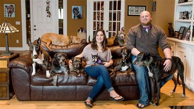 Vợ chồng đóng giường siêu rộng ngủ cùng 8 chú chó hoang - 1