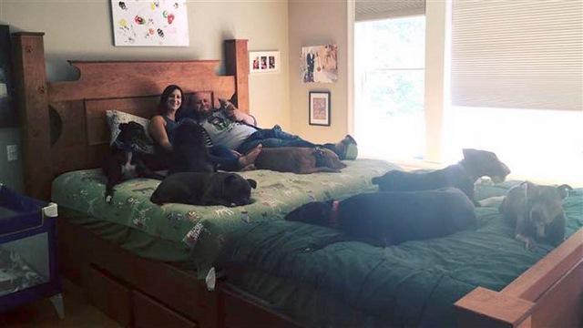 Vợ chồng đóng giường siêu rộng ngủ cùng 8 chú chó hoang - 6