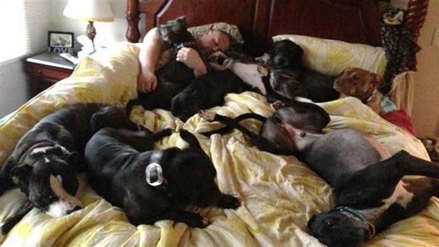 Vợ chồng đóng giường siêu rộng ngủ cùng 8 chú chó hoang - 5