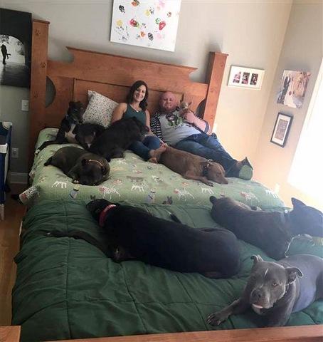 Vợ chồng đóng giường siêu rộng ngủ cùng 8 chú chó hoang - 4