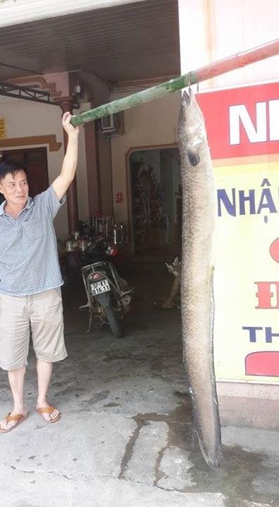 Nông dân Nghệ An bắt được cá chình 'khủng' - 2