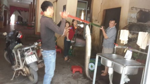 Nông dân Nghệ An bắt được cá chình 'khủng' - 3