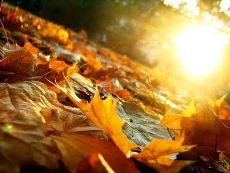Lắng lòng với 4 ca khúc dạt dào cảm xúc mùa thu - 2