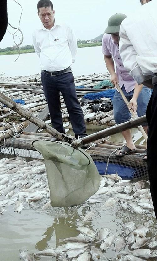 Cá mú, hàu nuôi lồng bè chết bất thường ở Hà Tĩnh - 1
