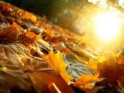 Lắng lòng với 4 ca khúc dạt dào cảm xúc mùa thu