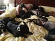 Vợ chồng đóng giường siêu rộng ngủ cùng 8 chú chó hoang