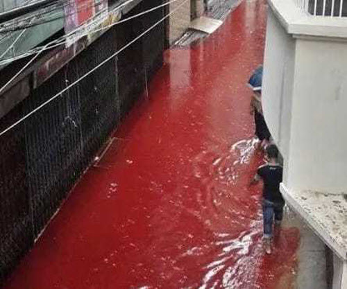Phố xá biến thành sông máu đáng sợ sau lễ tế động vật - 3
