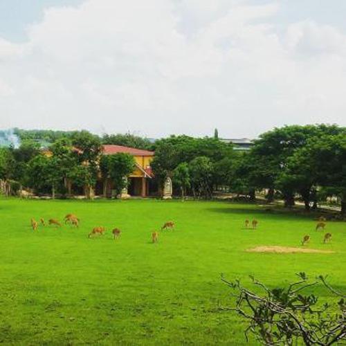 Sài Gòn cuối tuần kéo nhau xuống Vườn Xoài tận hưởng không gian xanh - 3