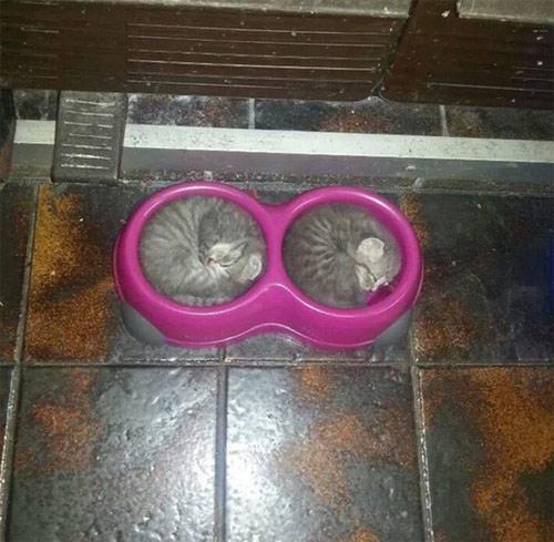 Một khi mèo đã ngủ thì chẳng cần biết ông chủ nghĩ gì - 2