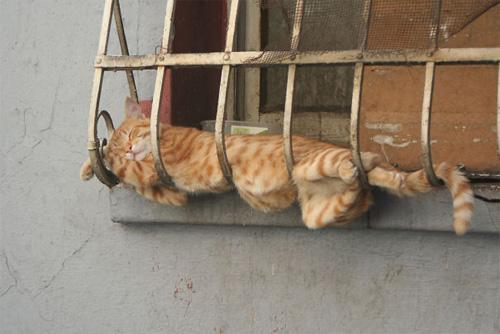 Một khi mèo đã ngủ thì chẳng cần biết ông chủ nghĩ gì - 6