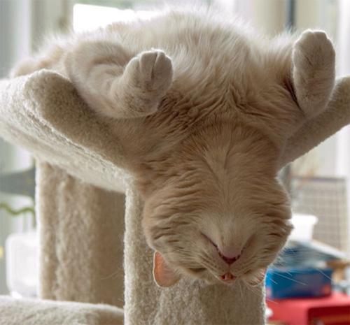 Một khi mèo đã ngủ thì chẳng cần biết ông chủ nghĩ gì - 8