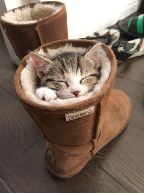 Một khi mèo đã ngủ thì chẳng cần biết ông chủ nghĩ gì - 10