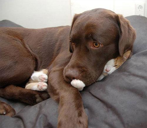 Một khi mèo đã ngủ thì chẳng cần biết ông chủ nghĩ gì - 11