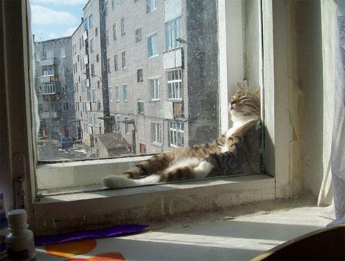 Một khi mèo đã ngủ thì chẳng cần biết ông chủ nghĩ gì - 14